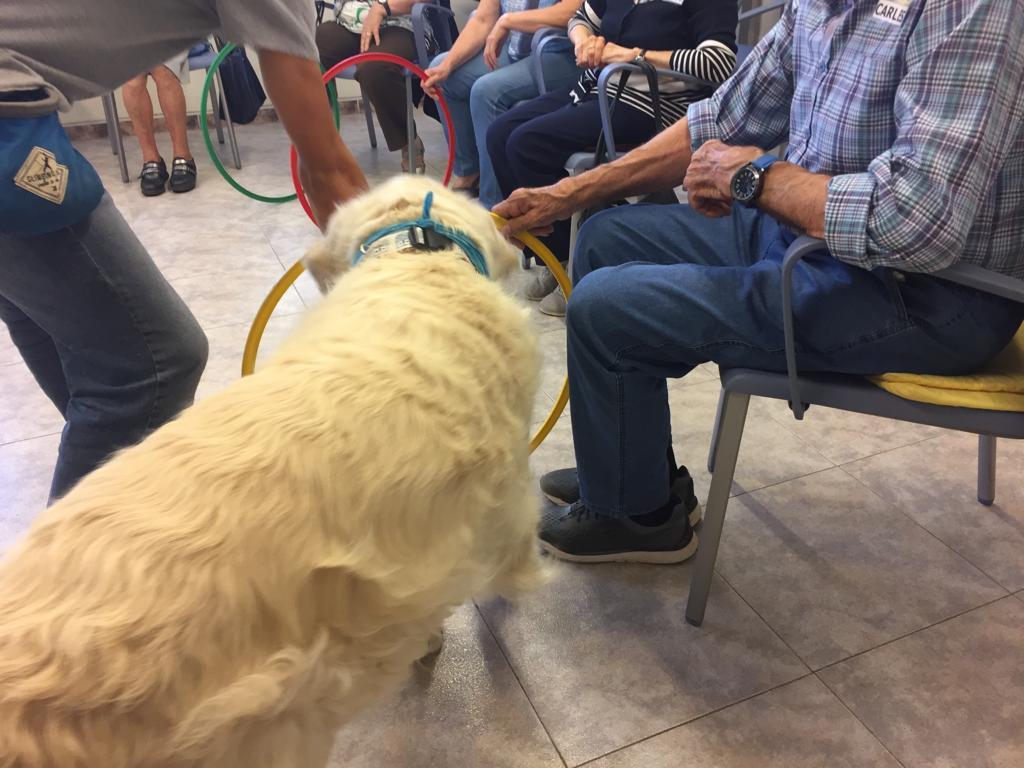 Caninoteràpia - Terápies amb el cor